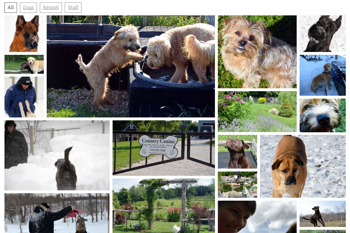 Country-Canine-Dog-Kennel-gallery-screenshot